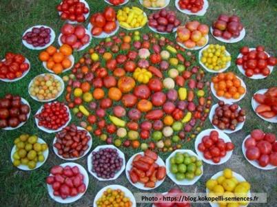 Koko-tomates